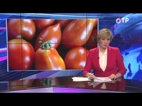 В Ростовской области уничтожили 8 тонн турецких томатов
