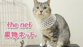 funny cat - cats wearing net / 妹猫の果物ネットが気になって仕方ない猫【猫 おもしろ】