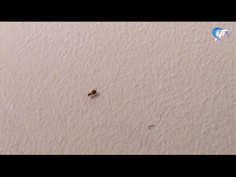 Пациенты детской областной больницы жалуются на тараканов