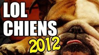 Compilation chiens comiques