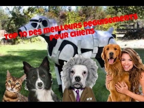 [TOP 10] LES MEILLEURS DÉGUISEMENTS POUR CHIENS !