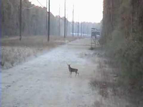 Król strzelców polowanie jeleń