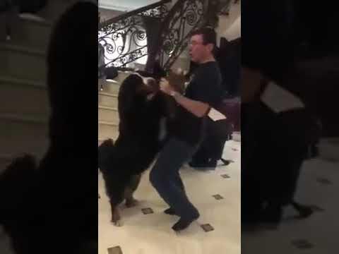 Луценко здивував мережу танцем з собакою (ВІДЕО)