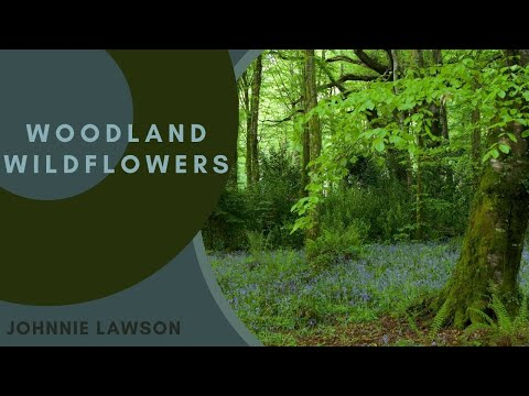 bird - Students of every nationality, every creed and no matter which language they speak are playing these 8 hour nature soundscapes as they study. They find the r...