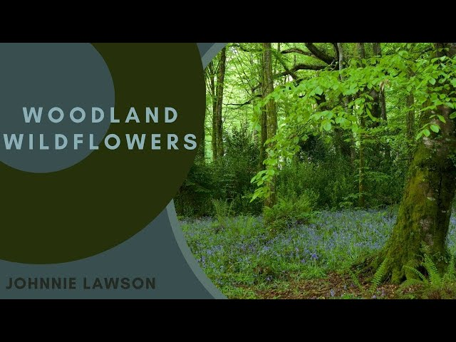 8 Hours Relaxing Nature Sound | Mp3FordFiesta.com Relaxing Nature Sounds