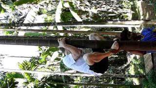 2008 01 16 Goa Bryan Climbinb Palm 208