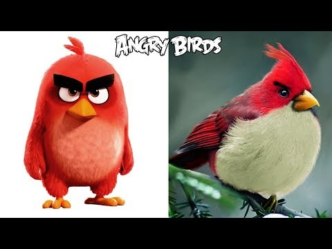 Angry Birds Characters In Real Life | All Characters |
