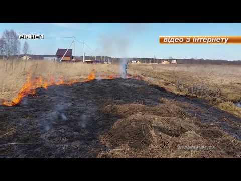 Чому жителям Рівненщини не варто палити суху траву? [ВІДЕО]