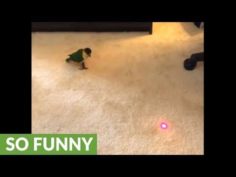 il-pappagallino-e-il-puntatore-laser