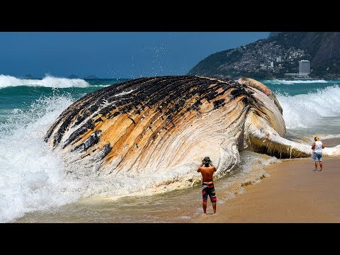 7 Most Giant Sea Creatures You've Ever Seen