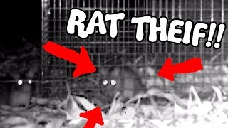 This time we go further down the rabbits hole, hehehehehee. The hunt continues. Thanks for watching dubbbernaughts__SUBSCRIBE ► https://www.youtube.com/channel/UC-tsNNJ3yIW98MtPH6PWFAQ?sub_confirmation=1Main Channel ► https://www.youtube.com/user/iDubbbzTVSecond Channel ► https://www.youtube.com/channel/UC-tsNNJ3yIW98MtPH6PWFAQGaming Channel ► https://www.youtube.com/channel/UCVhfFXNY0z3-mbrTh1OYRXAWebsite ► http://www.idubbbz.com/Instagram ► https://instagram.com/idubbbz/Twitter ► https://twitter.com/IdubbbzFacebook ► http://www.facebook.com/IDubbbzTwitch ► http://www.twitch.tv/idubbbz_