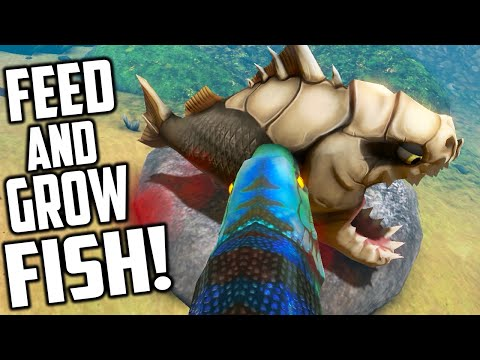 Feed and grow fish bonrex piranha new fish new river for Feed and grow fish online