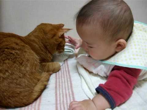 「[ネコ]かわいい赤ちゃんの指をしゃぶってあげる心優しい猫ちゃん。」のイメージ