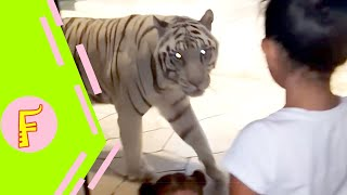 Video Funny Kids and Animals at the Zoo - Funny Kids Fails Vines MP3, 3GP, MP4, WEBM, AVI, FLV Maret 2019