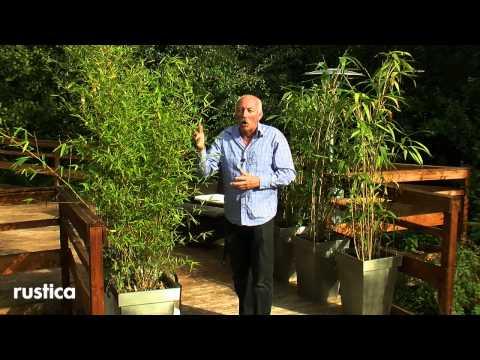 Comment traiter du bambou la r ponse est sur - Comment traiter le bambou ...