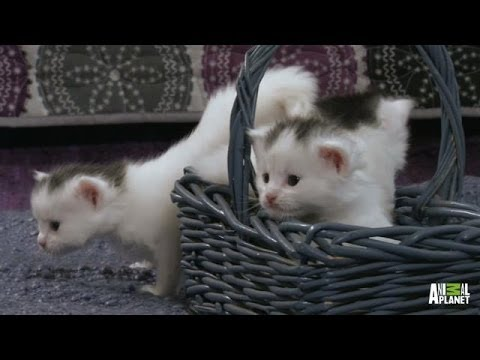 A Basket Full of Kittens %7C Too Cute%21