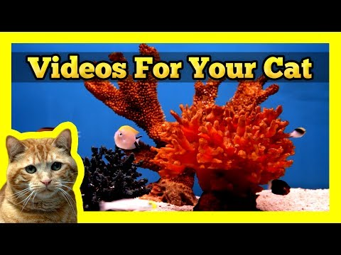 fish - Here's some nice fish tank scenes in 1080P HD for your (and your pets) enjoyment! This video was filmed at Island Pets Unlimited in Richmond, BC. Not only we...
