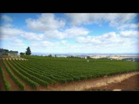 Son inherits father's winery business at eight-years-old