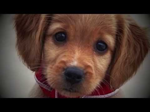 """Cute Puppy & Funny Dogs  """"Orange is the New Black"""" Dog Adoption Parody Sweet !!!"""