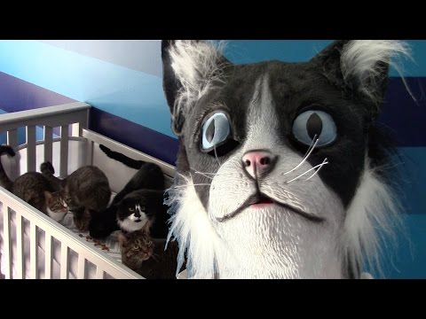 CatDad Feeds His Kitties In Cat Mask Fail! (Original Video)