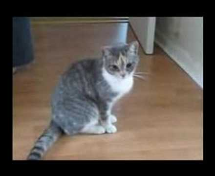 Funny Drunk Cat / よっぱらいネコ
