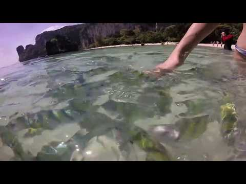 Thailand Phuket Fish in the Sea Andaman Sea Video For Kids For BABY