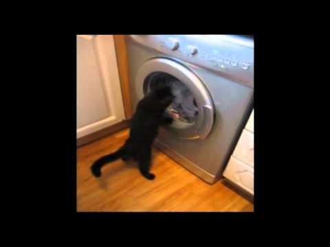 VIDEO: Fascinovaná kočka soupeří s pračkou