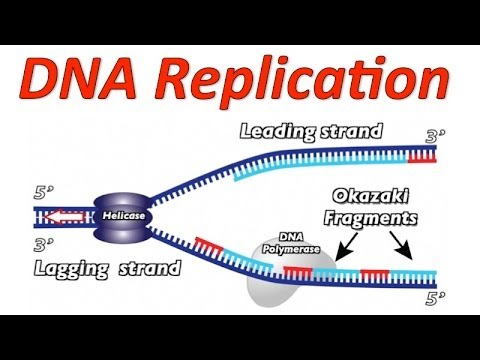 DNA Replication Rap