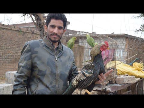 Saka's village home Mali kallar saydan my motherland Pakistan