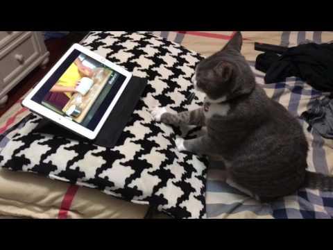 Kissa katselee tabletilta videota ja alkaa itsekin leipomaan