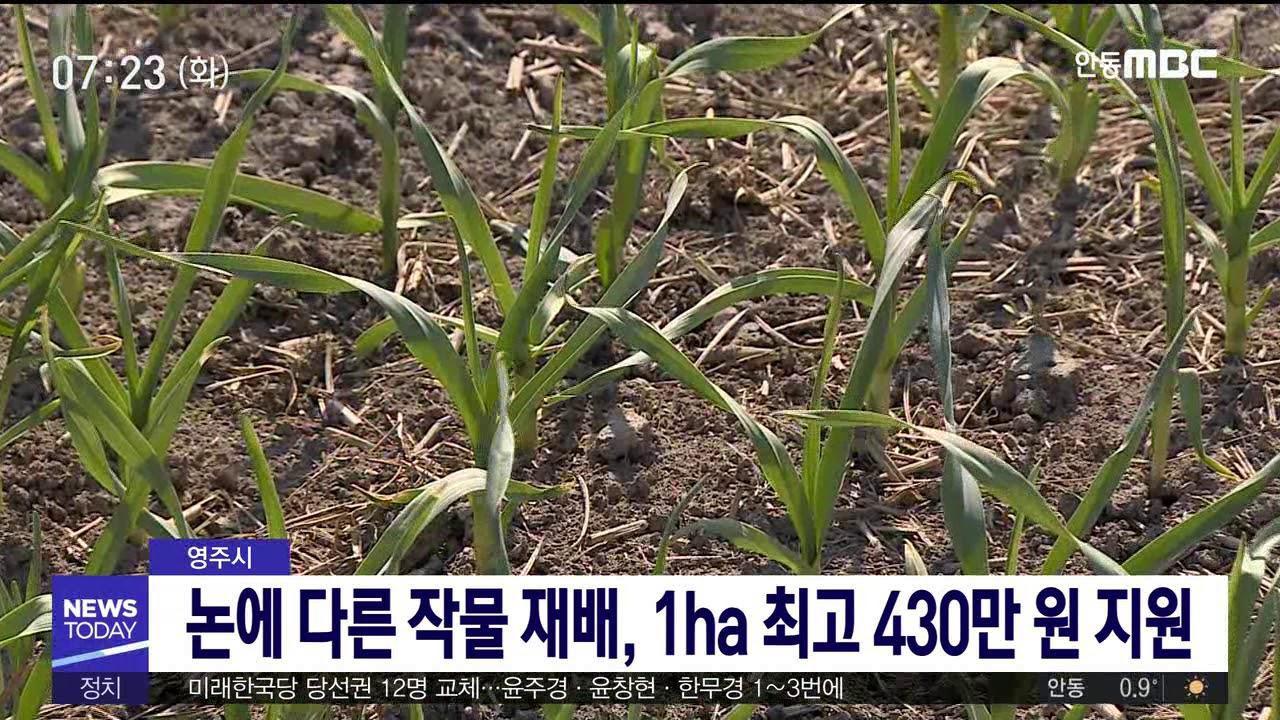 영주시, 논에 다른 작물 재배 지원