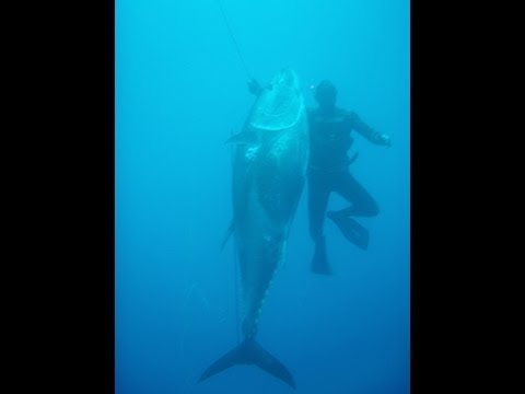 0 Spearfishing Video