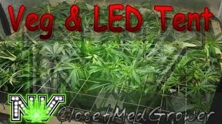 Veg and LED Tents, 1/20/2017 by  NVClosetMedGrower