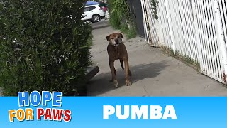Download Youtube: Senior dog abandoned by his family and lived on the streets alone for a year!