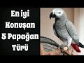 En İyi Konuşan 5 Papağan Türü