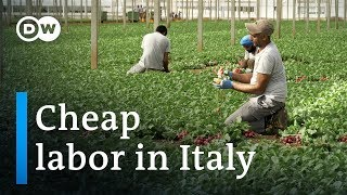 Video Clandestine employment of Indians in Italy | DW Documentary (Migrant documentary) MP3, 3GP, MP4, WEBM, AVI, FLV Desember 2018