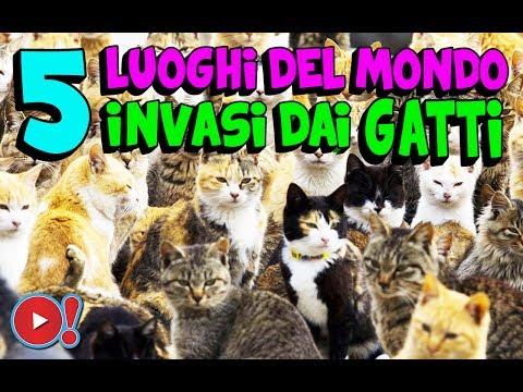 5 luoghi nel mondo invasi dai gatti!