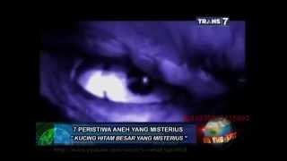 Video On The Spot - 7 Peristiwa Aneh yang Misterius MP3, 3GP, MP4, WEBM, AVI, FLV Desember 2018