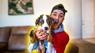 I GOT A NEW PUPPY!! **CUTEST DOG IN THE WORLD**