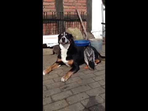 VID 20150615 WA0003 (видео)