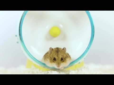 AprilsAnimals - Taco Taco on her wheel super fast to slo-motion