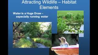 Creating a Wildlife-Friendly Landscape