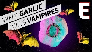 Why Do People Think Garlic Kills Vampires? - Forklore by Eater