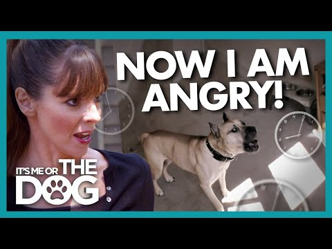 Victoria Gets Angry When Dog is Locked In 'Dungeon' For 15 Hours | It's Me or The Dog