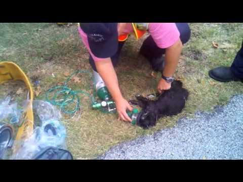 emozionante: questo gattino sembrava morto ma riescono a salvarlo