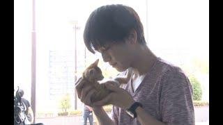 岩田剛典が「ずっと見ていられる」と笑みを向ける相手は…/映画『パーフェクトワールド 君といる奇跡』子猫と戯れるメイキング映像