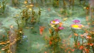 モネの『睡蓮』は実在した!?岐阜の名もない池が名画そっくりと話題。