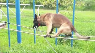 Nie każdy pies nadaje się do policji