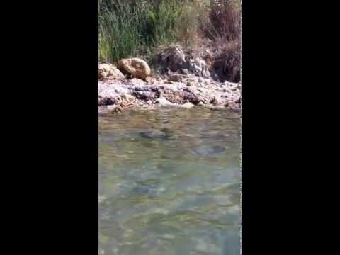 Strano fenomeno in mare a Isola Capo Rizzuto