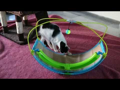 NEW TOY!  Pet Parade Cat Ball Swing - Playtime Rocking Toy (2018)